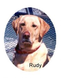 Rudy's Friends Dog Training,  Inc.