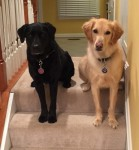 sadie-and-tucker-waiting-to-play